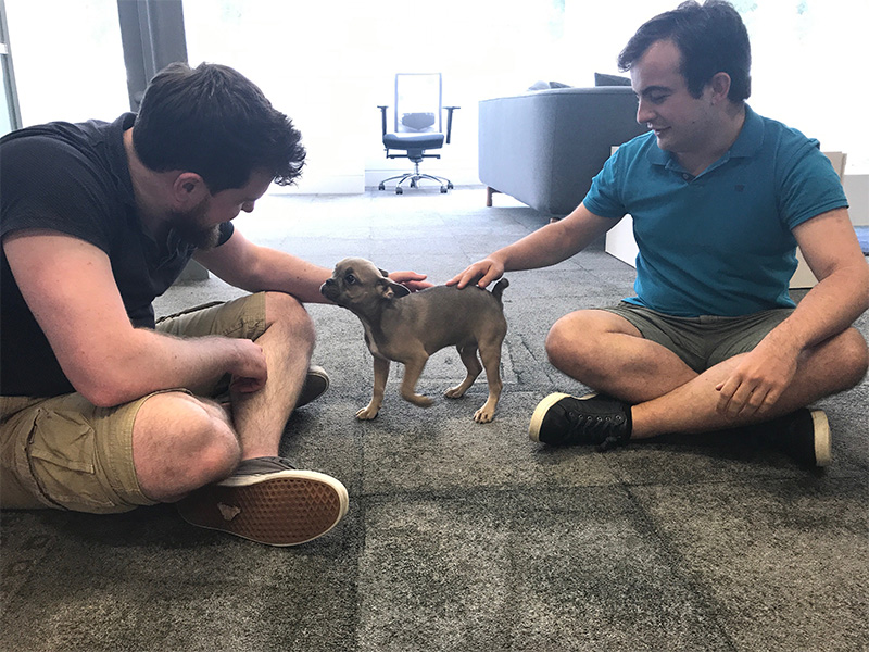One of our office pets